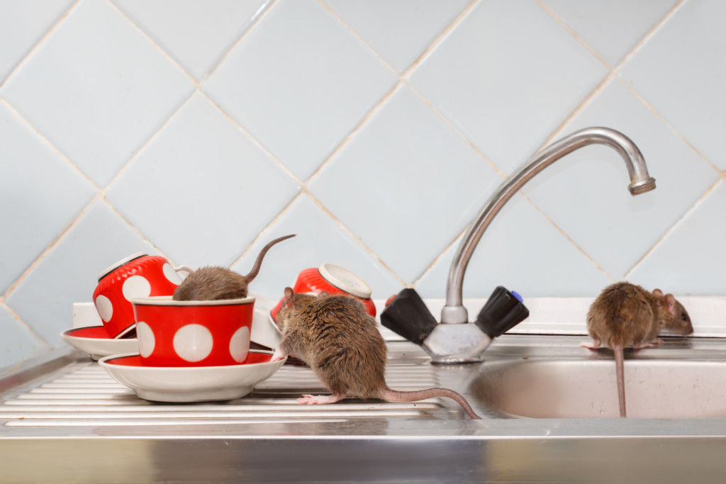 Mice on countertop